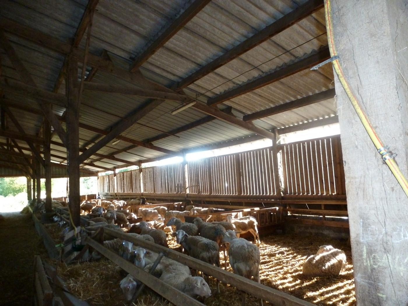 Ibb ovins lait bio en bretagne une fili re peu for Chambre agriculture bretagne