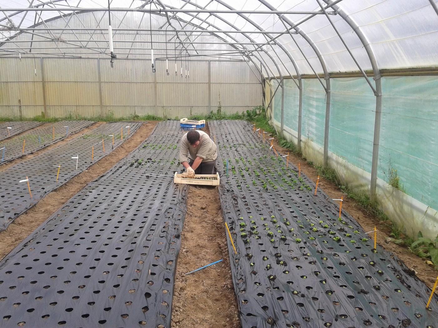 Legumes hiver plantation planter avocat avocatier terreau for Jardin hiver plantation
