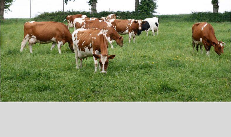 Les bienfaits de l'Agriculture Bio !